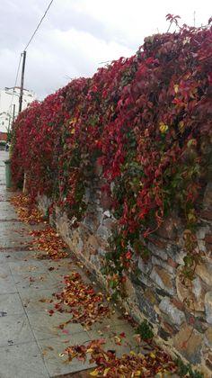 mjt , mytilene, leaves.