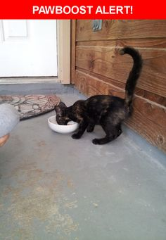 Is this your lost pet? Found in Round Rock, TX 78664. Please spread the word so we can find the owner!  Little black kitten - maybe 4-5 months old with calico markings.   Logan and Elder Way
