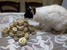 Cibo naturale per i miei gatti con Schesir   amore per i gatti