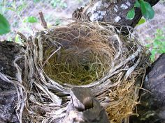 """It is a day you may have planned for years, but now that it is here, you are not sure what to do. The kids have finally """"flown the nest"""" and it is down to just you and perhaps your spouse. What do you do with that empty nest and how can you remodel to meet your changing needs? Here are a few tips from Chad of All Trades about good..."""