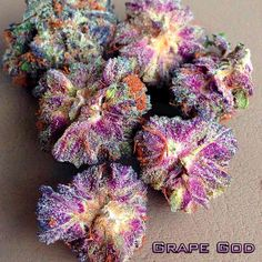 Grape God - Hybrid - 50% Sativa /50% Indica THC: 28%, CBD: 1% Grape God is a cross between God Bud, an indica, and Grapefruit, a sativa. The sativa genes are dominant, though the exact numbers are hard to come by. The THC content of this useful strain is relatively modest, about 14%, while the CBD content is low, about 0.6%. But the combination of the two, plus the sativa genetics, makes for a focused head high that's ideal for anxiety and chronic pain. Grape God gets its name from its…