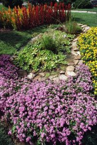 1000 images about ground cover plants on pinterest for Best low growing groundcover for full sun