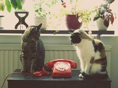 The Cat Phone!