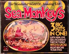 Real Live Sea Monkeys That Actually Hatch and Grow before your eyes.I don't think so ! Vintage Comic Books, Vintage Comics, Vintage Ads, Best Memories, Childhood Memories, Sea Monkeys, Toys In The Attic, Retro Ads, Old Signs