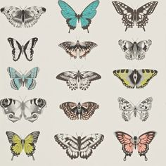 Papilio (111077) - Harlequin Wallpapers - Botanically-drawn butterflies arranged like a collector's specimen box. Shown here in peach, blue and zesty green on a stone background. Other colour ways available. Wide width roll and paste the wall product. Please request a sample for true colour match.
