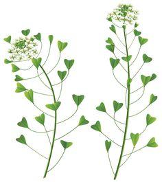 Wild Flower PNG Clip Art Image