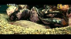 Rússia Selvagem - As Florestas Secretas_National Geographic