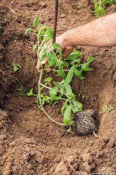 53 New Ideas Home Plans Plantation Potager Garden, Garden Trellis, Garden Planters, Herb Garden, Gardening For Beginners, Gardening Tips, Vertical Vegetable Gardens, Types Of Vegetables, Easy Garden