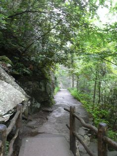 Great Smoky Mtn trail