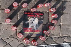 Come ormai saprete da tutti i social, lo scorso giugno è stato torturato e poi impiccato Angelo, il cane randagio di Sangineto da quattro giovani ragazzi che hanno filmato l'uccisione e poi postato il video...