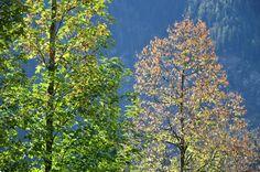 #Herbst Farben in den Bergen in #Oberbayern - so wundervoll leuchtet die #Natur im Oktober