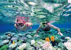 5. DIVING  diving, is one of the activities you can do in a stay in Cancun, because the waters of Cancun are very clear and everything can be found below them is amazing.