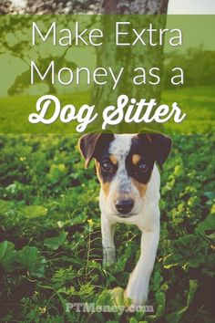 Make Money as a Dog Sitter