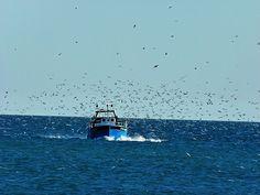 barco pesca entrando a puerto en Cambrils. Tarragona. Costa Daurada.