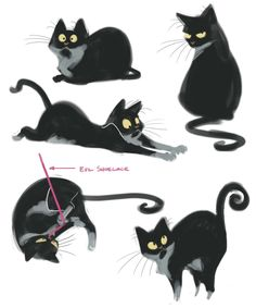 dailycatdrawings:  211: Page of Papi Had some down time at work this morning so I did some quick sketches of my kitty Papillon.