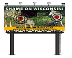 """FOR IMMEDIATE RELEASE August 8th, 2013 """"WOLF GROUP ADVERTISES AGAINST WOLF HUNT WITH BILLBOARD IN DELLS"""" (Madison, WI)- In an effort to increase awareness about the upcoming Wisconsin wolf hunt, Friends of the Wisconsin Wolf, a non-profit wolf advocacy group with members all over the state, placed a billboard between mile marker 191 & 192, on Hwy A that goes over I 90/94. The controversial billboard shows wolf families in the sights of a rifle stating """"SHAME ON WISCONSIN"""" ..."""