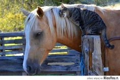 najlepsi przyjaciele :)