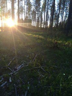 Keväinen ilta aurinko