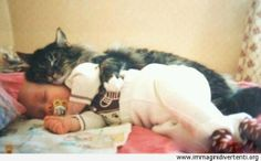 baby-sitter-gatto