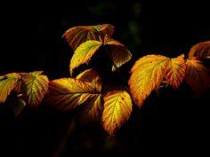 Autumn, Fall Foliage, Leaves, Golden Autumn, Colorful