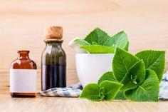 Rýmovník - lék na rýmu