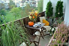 białe kwiaty na balkon - Szukaj w Google