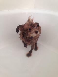 Chauncey bath