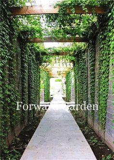 Landscape Architecture, Landscape Design, Garden Design, Courtyard Design, Architecture Courtyard, Courtyard Ideas, House Landscape, Green Landscape, Pergola Drapes