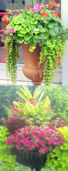Colorful flower gardening in pots made easy with 38 best designer plant list for. Colorful flower gardening in pots made easy with 38 best designer plant list for each container and sun vs shade locations. Grow a beautiful flower ga. Container Flowers, Container Plants, Container Gardening, Flower Gardening, Organic Gardening, Beautiful Flowers Garden, Amazing Flowers, Beautiful Gardens, Easy Garden