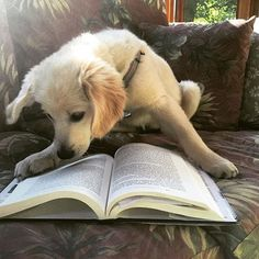 Instagram accounts that combine the best of the worlds of dogs and books.