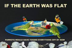 If the earth was flat parrots would have tossed everything off it by now. Cute Animal Memes, Cute Animals, Conure Bird, Bird Mom, Funny Parrots, Funny Birds, Flat Earth, Cockatiel, Funny Memes