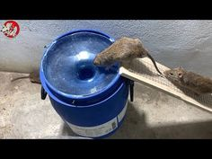 Easiest Rat Trap Homemade - YouTube Rat Trap Diy, Mouse Trap Diy, Amazing Life Hacks, Useful Life Hacks, Mouse Traps That Work, Bucket Mouse Trap, Mouse Poison, Getting Rid Of Rats, Mice Repellent