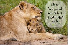 Moms.  We protect our babies.