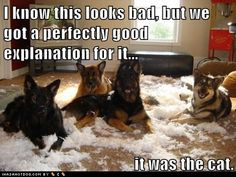 Wow almost identical to what I came home to from my German Shepard the past Friday night...too bad we don't have a cat!!