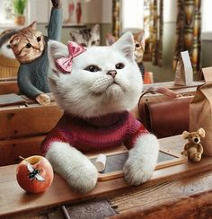 Funny Cats so cute To Make You Smile Cool Cats, I Love Cats, Costume Chat, Cat Costumes, Animals And Pets, Funny Animals, Cute Animals, Animal Fun, Crazy Cat Lady