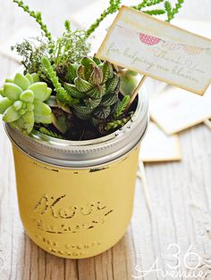 Show how much your little sprout has grown this year with a pretty pot of succulents.