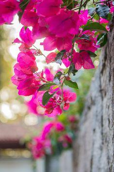 Space Phone Wallpaper, Pop Art Wallpaper, Flower Background Wallpaper, Sunflower Wallpaper, Flower Backgrounds, Nature Wallpaper, Flowers Nature, Exotic Flowers, Amazing Flowers