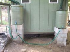 Rainwater automatic chicken waterer.