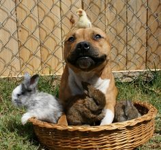 HAPPY EASTER! | Whats The Cutest Easter Photo That Ever Happened? - This one, obviously.