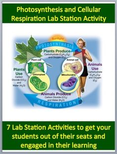This fully editable Lab Station Activity on Cellular Respiration and Photosynthesis is meant to get your students out of their seats and engaged in the content. Each station not only offers a unique opportunity to test your students knowledge (offer an opinion, answer questions based on a video or reading, draw, etc.), but also provides a fantastic learning opportunity where your kids are learning through assessment. Each station comes with a description card while some also contain more ...