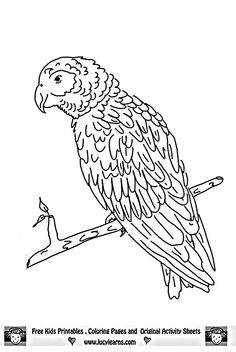 sock monkey coloring pages free parrot coloring page monkey coloring page servicios jurdicos