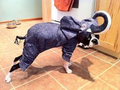 Have you ever seen a disgruntled elephant? Now you have...