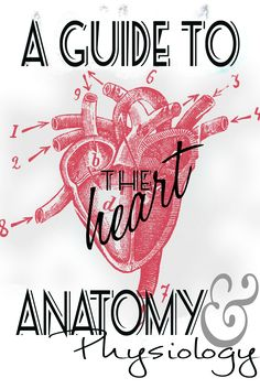 Anatomy and Physiology, heart study guide information. Made by a nursing student to help study. Please repin! Nursing Students, Study, Science, Heart Anatomy, Anatomy And Physiology, Ideas, Studio, Studying, Science Comics