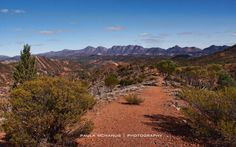 Wilpena Pound from Bunyeroo Gorge Ranges, Caravan, Geography, Places To Go, National Parks, Landscapes, Country Roads, Journey, Earth