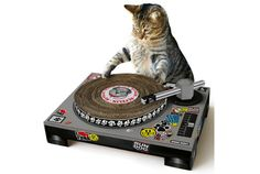 Turn table (claw board) for cats!