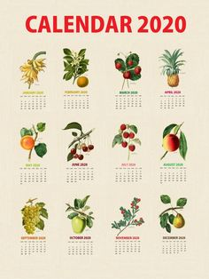 Botanical Fruit 2020 Calendar Printable Templates culinary Fruits Monthly Planner In botany Aggregate fruit Ovary Latest Designs 12 Months Yearly One Page Free Printable Calendar Templates, Printable Calendar 2020, Blank Calendar Template, Printables, December Calendar, 2019 Calendar, Photo Calendar, Calendar Design, Print Calendar