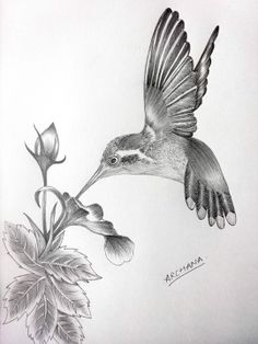 Caption the picture! Caption the picture! Hummingbird Drawing, Hummingbird Flowers, Hummingbird Tattoo, Flower Line Drawings, Bird Drawings, Pencil Drawings, Pencil Sketches Easy, Drawing Sketches, Scratchboard Art