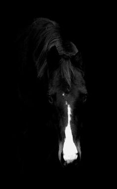 ".WOW!!  What an awesome photo!!  My applause to the photographer!!  BEAUTIFUL HORSE besides!!  Love this!  Good thing that this is not under ""more than words can say"" because I've said too much already!!  :-)  dj"