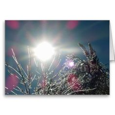 Sparkling Sunshine Icy Trees Blank Greeting Card