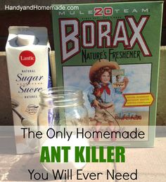 DIY Homemade Natural Ant Killer Recipe | Handy & Homemade